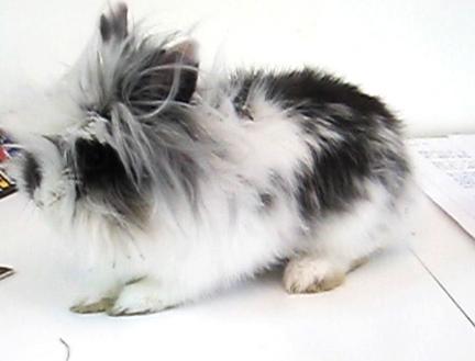 Rabbit…