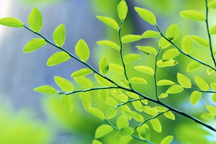 Greener Thoughts for a Happy New Year