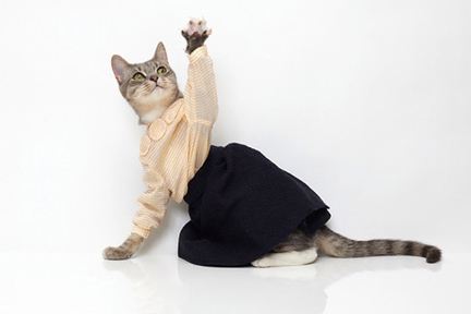 United Bamboo Cat Campaign